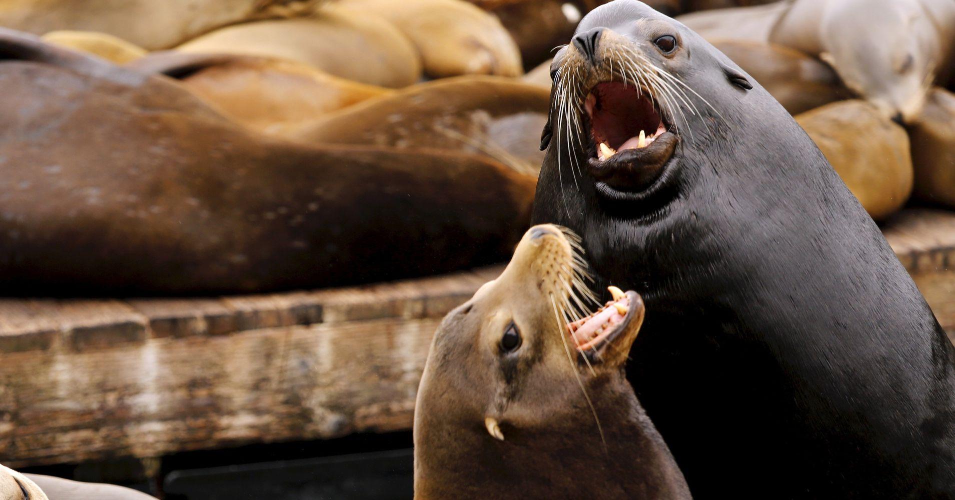 Sea Lion Attacks Shut Popular Swimming Spot In San ...