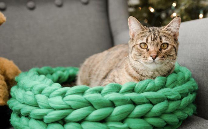 Merino Chunky Wool Pet Bed