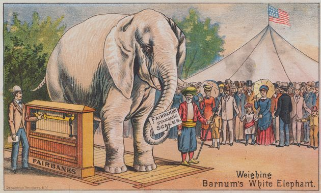 An advertisement featuring P.T. Barnum's white elephant, which he brought from Siam in