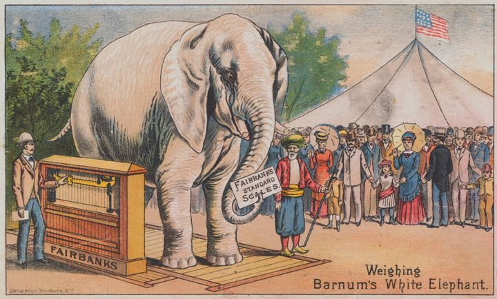 An advertisement featuring P.T. Barnum's white elephant, which he brought from Siam in 1884.