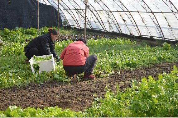 Τελικά είμαι αγρότισσα; … ένα άρθρο για το επάγγελμα της