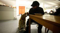 Wie Haustiere in Deutschland unter Hartz-IV leiden