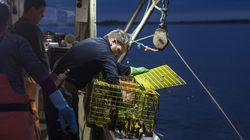 Recent Fishing Negotiations Show How The Government Is Unfit To Defend UK's