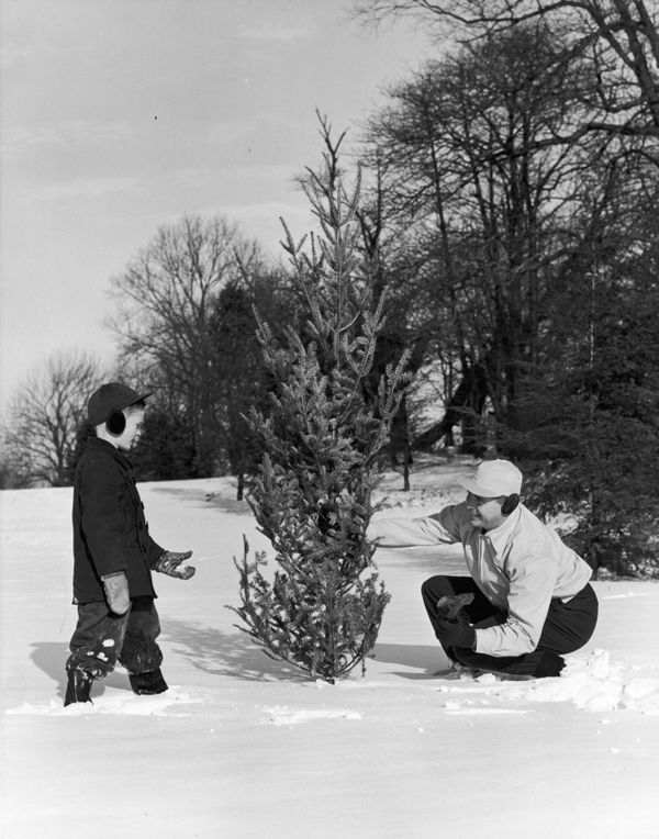 A boy and his father inspect a small evergreen tree during a Christmas tree hunt in a snowy field in 1955.