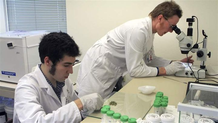 Connor Hellings and Jonathan Rupp work on marijuana samples at CannTest, a commercial marijuana testing laboratory in Alaska.