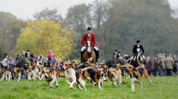 Opposition To Fox Hunting Is At An All Time High As Boxing Day Hunts Prepare To