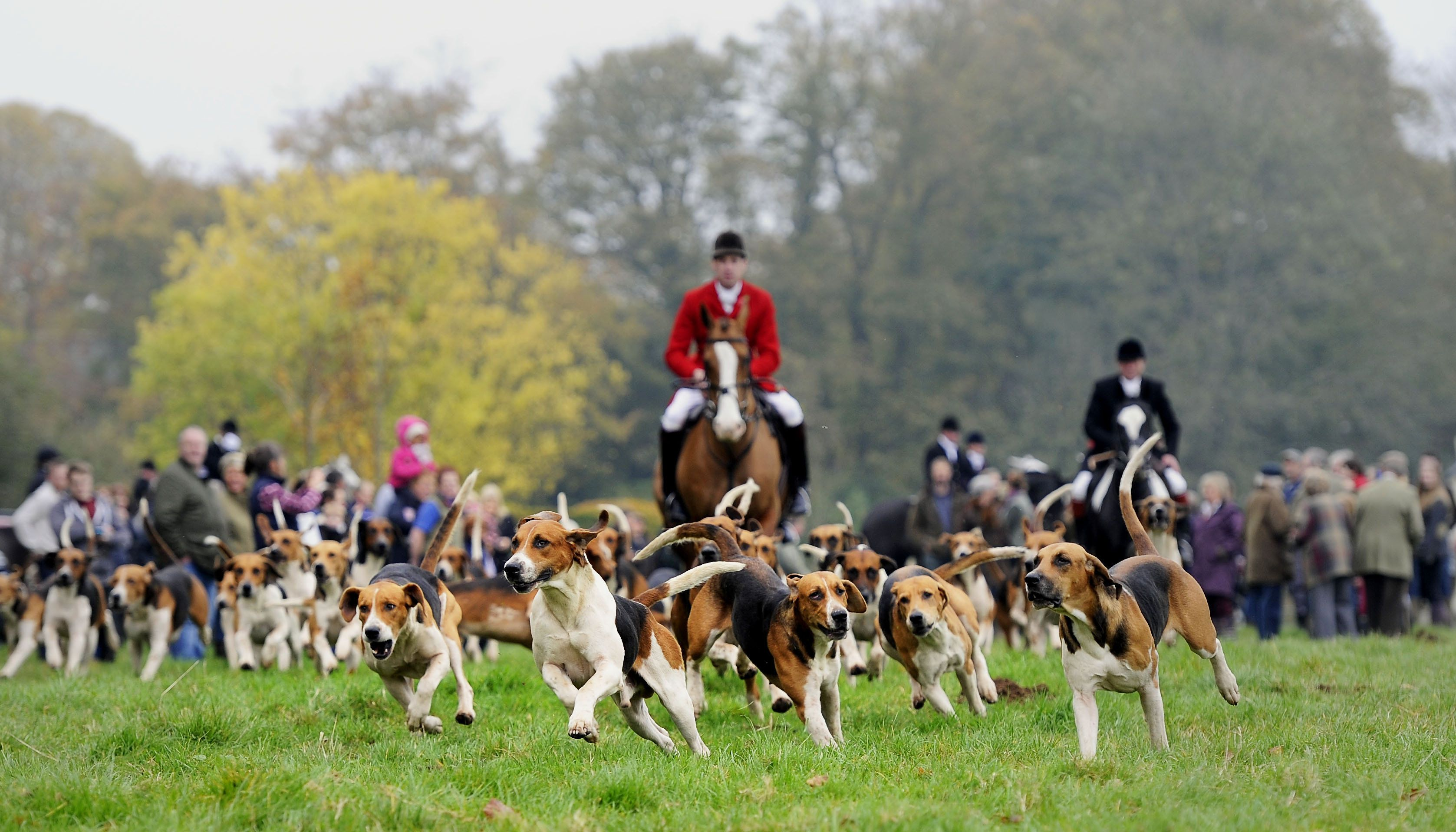 <strong>Opposition to fox hunting is at an all-time high, latest figures reveal. File image.</strong>