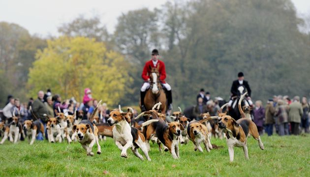 Opposition to fox hunting is at an all-time high, latest figures reveal. File