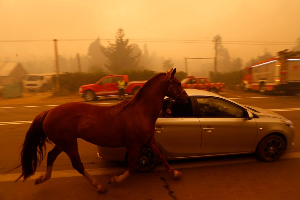 People leave San Ramon in a car taking their horse by the reins after a forest fire devastated the nearby town of S