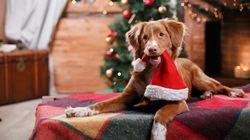 Darum sind Tiere zu Weihnachten keine gute Idee