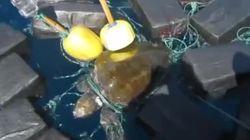 Küstenwache will Schildkröte aus Netz befreien - dann begreift sie, was ihr angetan
