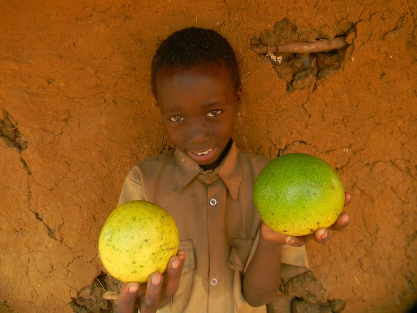 <strong>Young African primary school child holding monkey oranges.</strong>