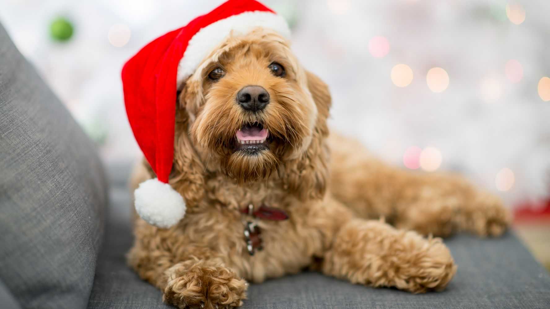 The Christmas Dogs Of Instagram Are Pawsitively Adorable