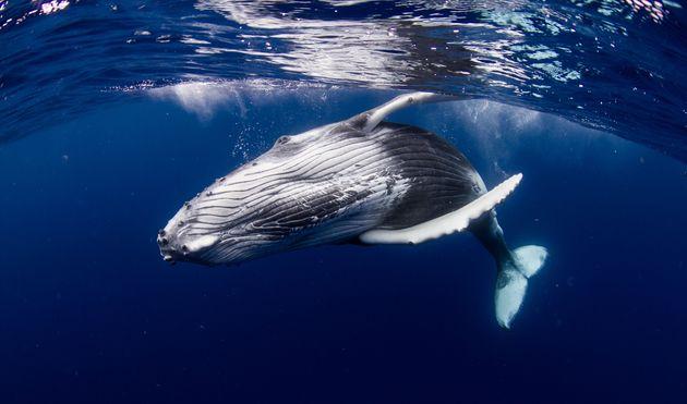 Κλιματική αλλαγή: Αυτά τα θηλαστικά κινδυνεύουν με εξαφάνιση το