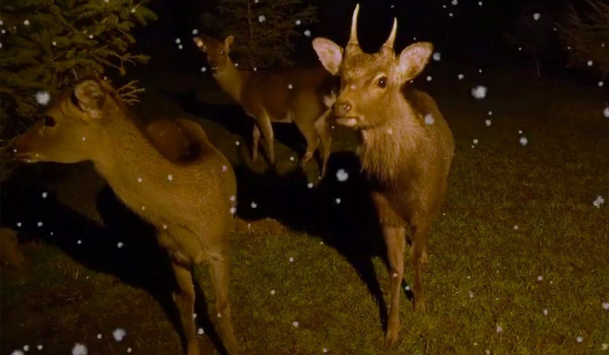 The hapless deer
