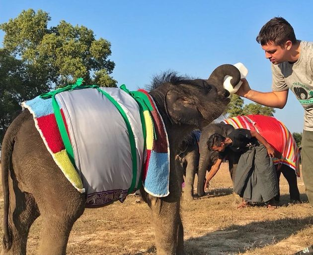 Baby Elephants Fend Off Myanmar Cold Spell With Homemade