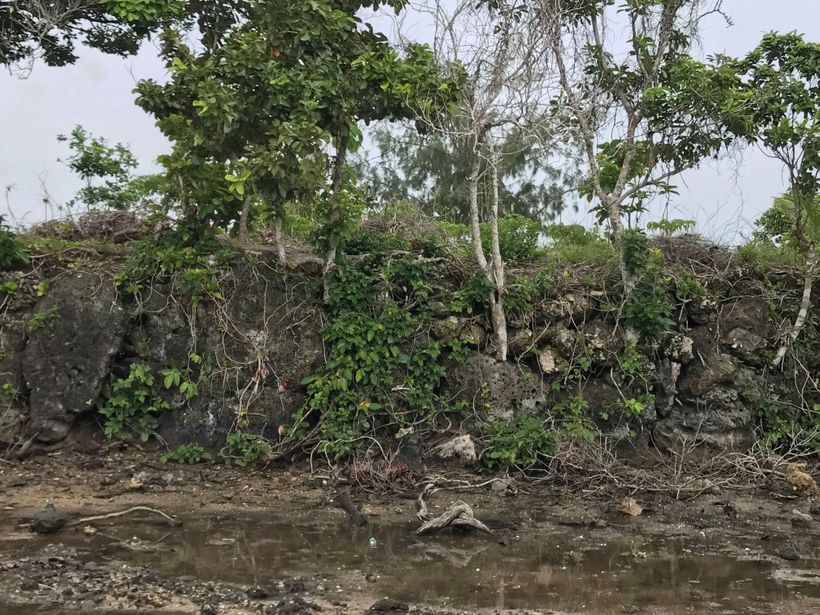 Pigeon Snaring Sia Mound at Pōpua, Tongatapu, Tonga. 2017