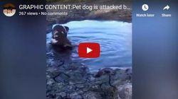 Βίντεο: Σκύλος δέχεται την επίθεση αλιγάτορα ενώ παίζει στο
