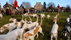 The Government Must Not Let Its Animal Welfare Bill Alienate The Rural Community