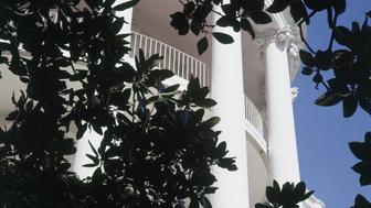 UNITED STATES - FEBRUARY 01: South portico of the White House, framed by Magnolia Grandifloria, planted by Andrew Jackson in memory of his wife (Photo by Horst P. Horst/Conde Nast via Getty Images)