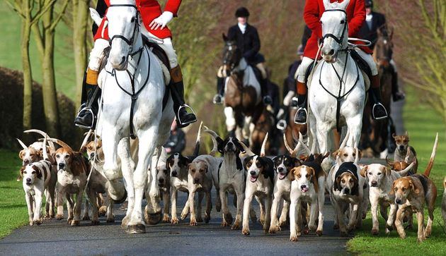 Police are investigating following claims a fox was illegally killed during a Boxing Day hunt. File