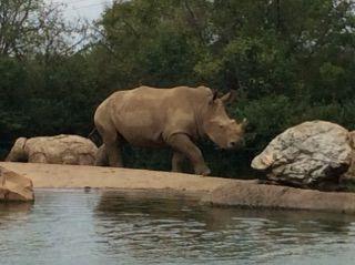 The rhino pond at Nashville Zoo
