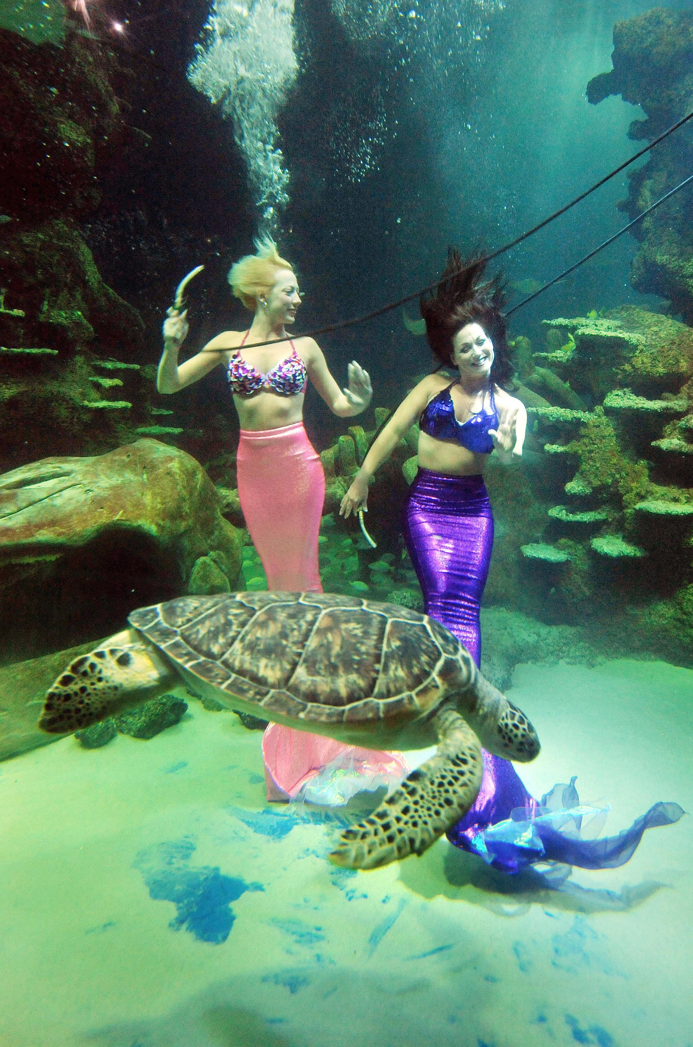 Stayce McConnell, left, and Marcy Shannon perform an underwater show with a turtle at Weeki Wachee State Park.