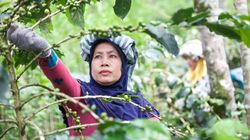 Coffee Crops Have Been Hit By Climate Change But Sumatran Farmers Are Fighting