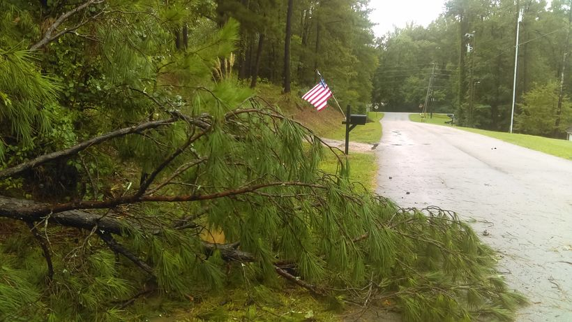Downed tree from Hurricane Irma in Georgia.  Photo by the author.