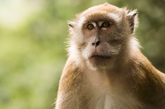 13 monkeys die after fire breaks out at Woburn Safari Park