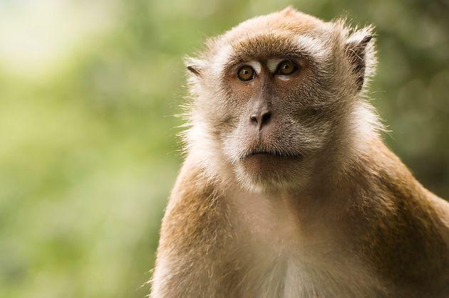 Horror blaze kills 13 monkeys at major United Kingdom safari park