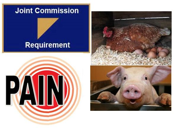 On January 1, 2018,  integrative treatment moves from hen to pig in a hospital's accreditation pain scores