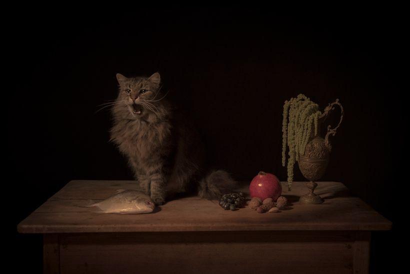 Tami Bahat: The Feline