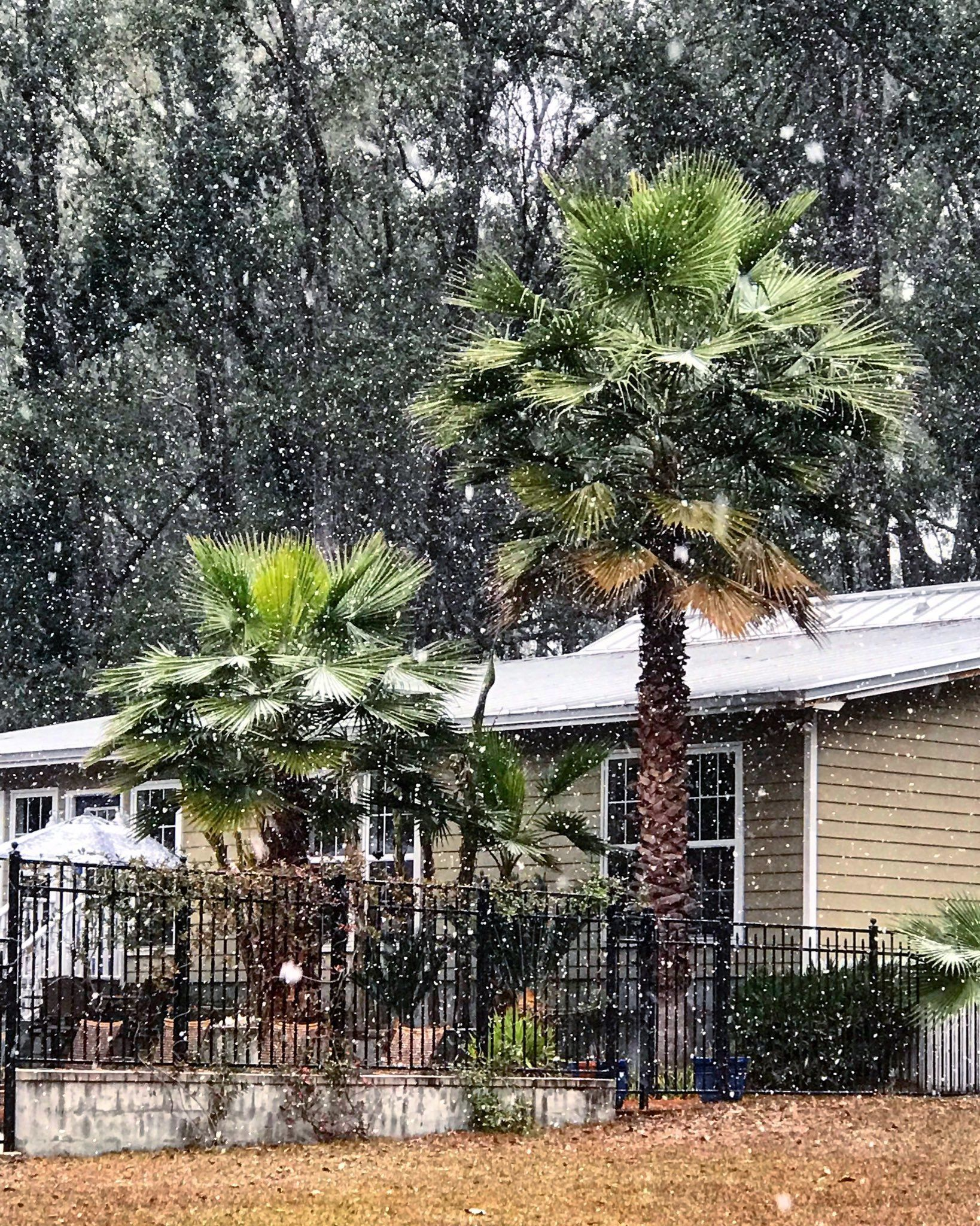 Snowfall covers Tallahassee as Florida hit by winter storm