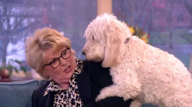 'This Morning': Brenda Blethyn's Dog Tries To Get Amorous With Her Live On