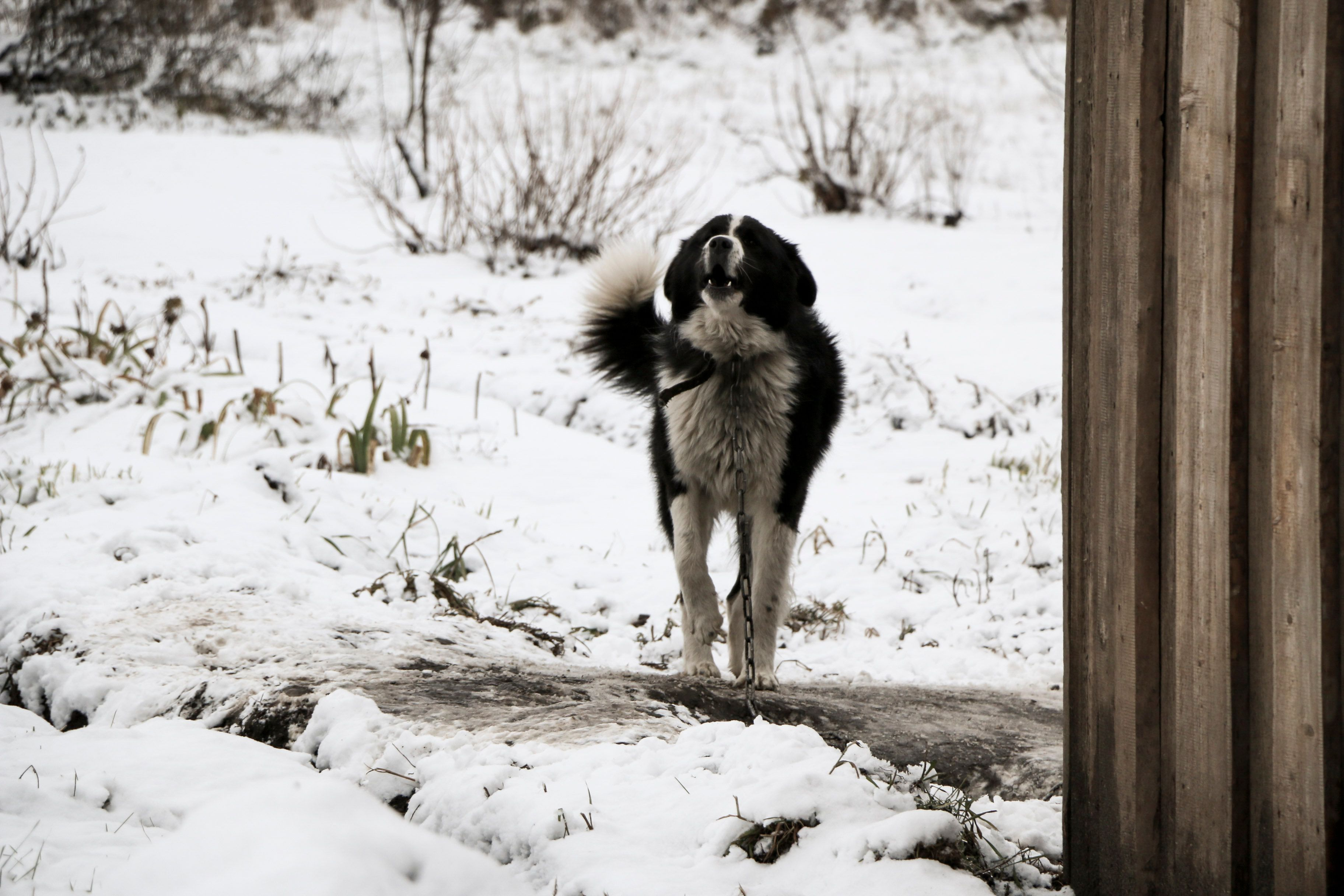 Dogs Left Outside In The Cold Have Died And Been Found 'Frozen Solid'