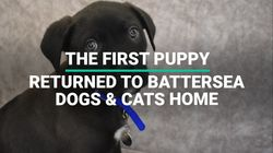 The First Puppy Returned To Battersea Dogs & Cats