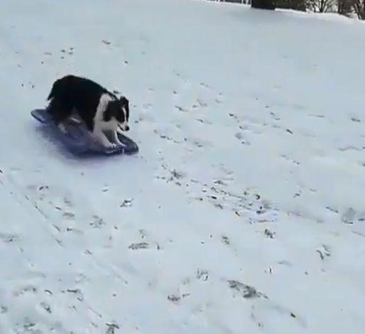 Αυτός ο παιχνιδιάρης σκύλος κάνει μόνος του έλκυθρο και κατακτά το