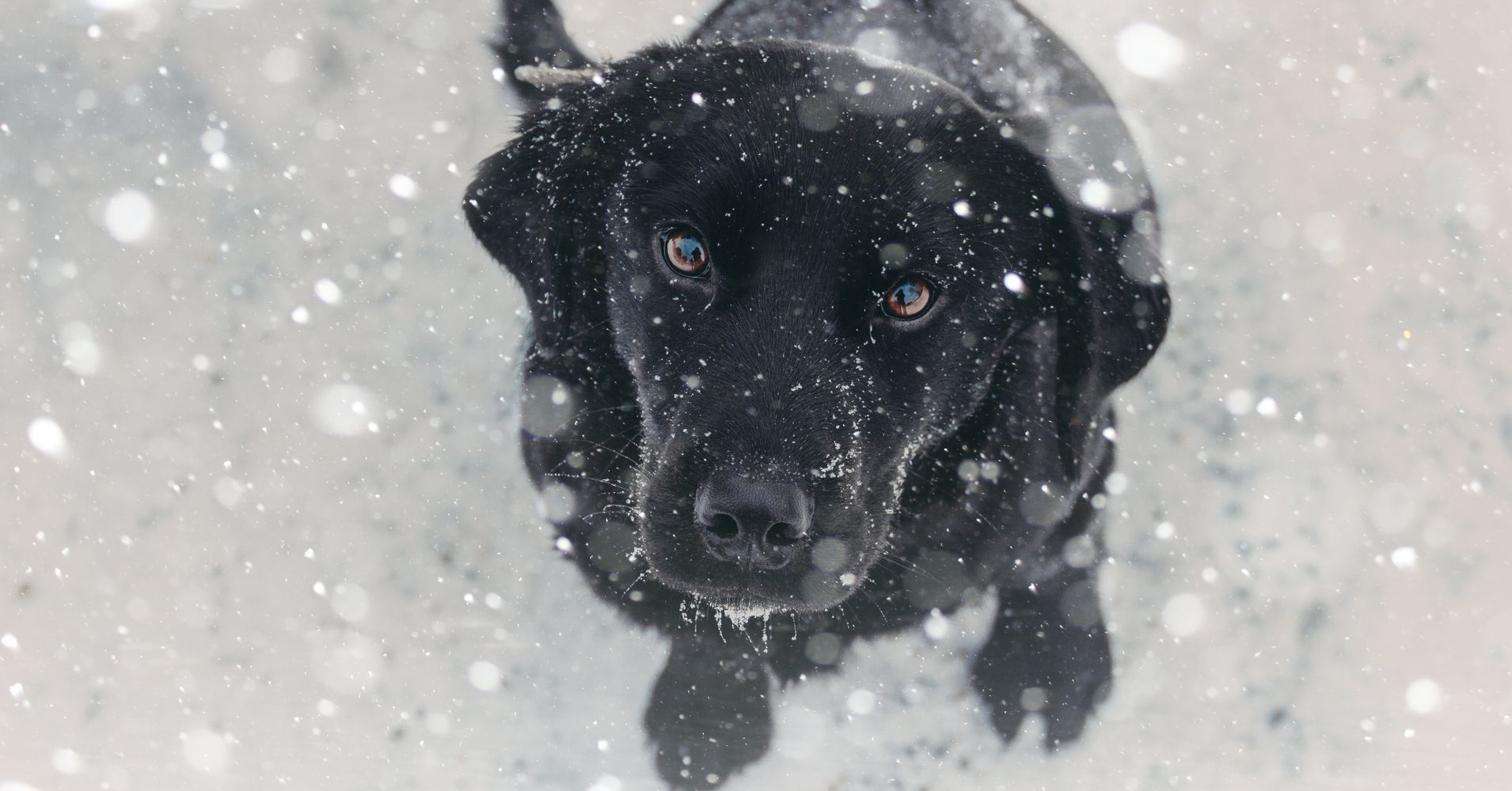 ad3f8d965f Dogs Are Dying After Being Left Out In The Cold. Here s How To Keep Them  Safe.