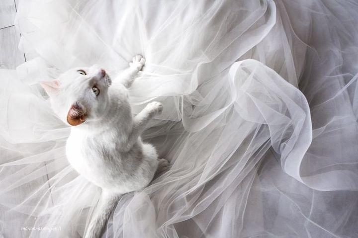 Perla had some fun with the wedding dress.