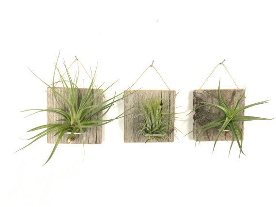 """Get these airplants <a href=""""https://www.etsy.com/listing/270421780/set-of-three-small-form-air-plant-and?ga_order=most_relev"""