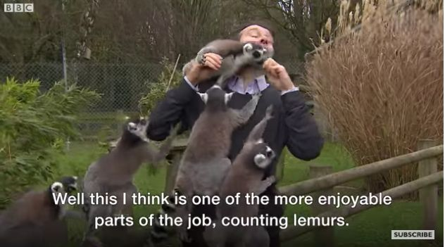 This BBC Reporter Had No Idea How Much Lemurs Liked To Move It, Move