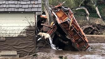 A search dog looks for victims in damaged homes after a mudslide in Montecito, California, U.S. in this photo provided by the Santa Barbara County Fire Department, January 9, 2018.   Mike Eliason/Santa Barbara County Fire Department/Handout via REUTERS     ATTENTION EDITORS - THIS IMAGE WAS PROVIDED BY A THIRD PARTY.
