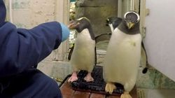 Penguins Queue Up For Their Weigh-In At Milwaukee County