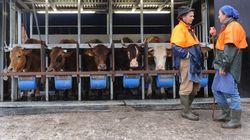 Glyphosat-Streit: Rebellische Milchbetriebe könnten schaffen, woran die Politik