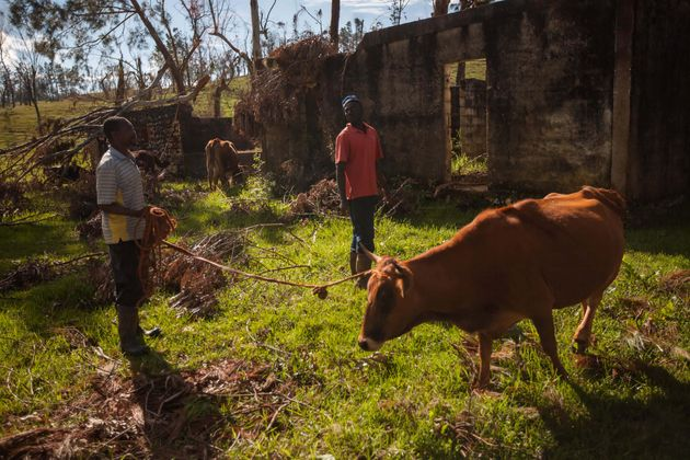 People and animals outside Port au Prince, Haiti in the aftermath of Hurricane