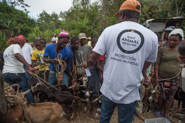 World Animal Protection's disaster response team takes care of animals outside Port au Prince,