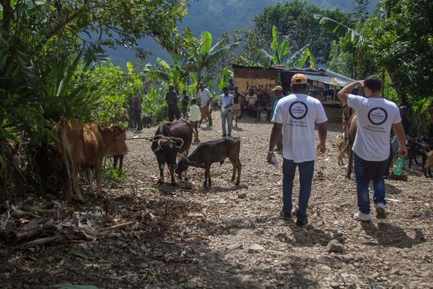 In the aftermath of Hurricane Matthew, World Animal Protection's disaster response team takes care of...