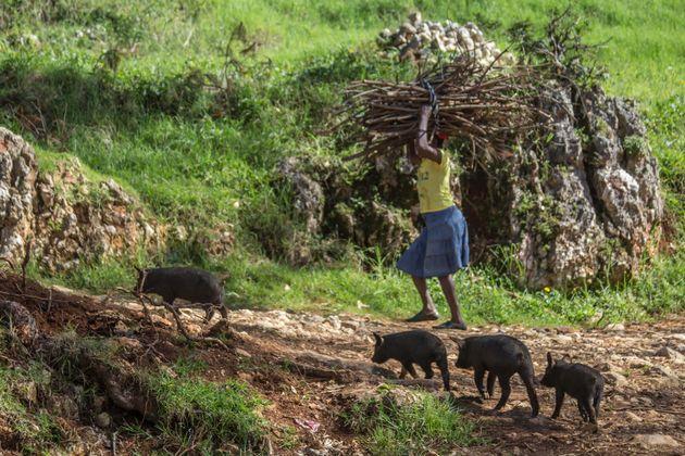 World Animal Protection / AFP