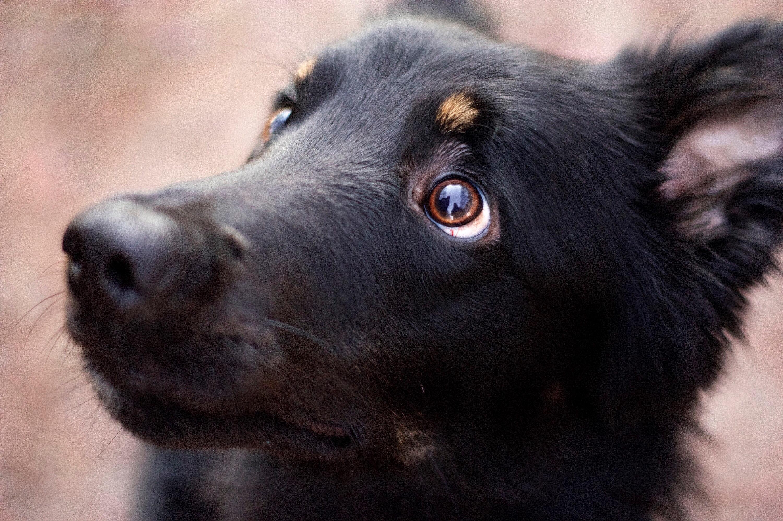 Grausamer Fund: Junger Hund erfriert direkt vor einem